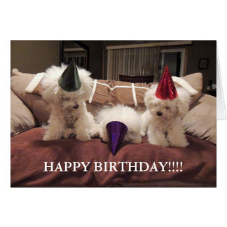 Bichon Frise Birthday Card!! Card