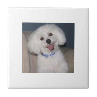 Bichon Frise Blue Collar Tile