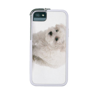 Bichon Frise Cover For iPhone 5/5S