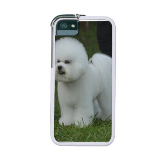 Bichon Frise iPhone 5 Cover