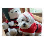 Bichon Frise celebrating in style! Greeting Card