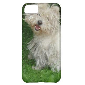 Bichon Frise Dog iPhone 5C Cases