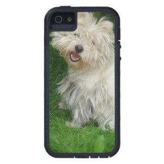 Bichon Frise Dog iPhone 5 Cases
