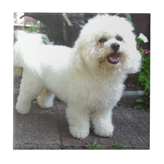 Bichon Frisé Dog Ceramic Tile