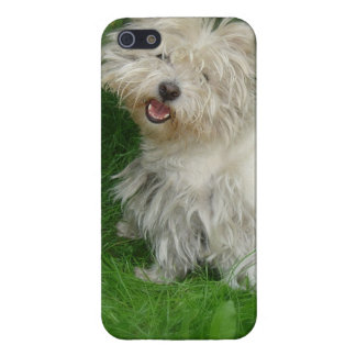 Bichon Frise Dog Case For iPhone 5