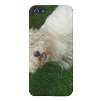 Bichon Frise Dog iPhone Case iPhone 5 Cover