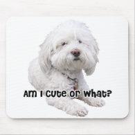 Bichon Frise Dog Mouse Pads