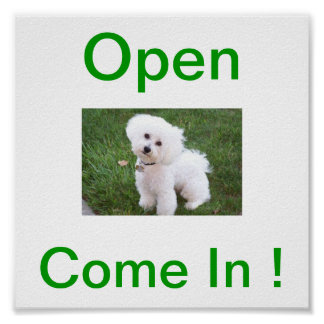 Bichon Frise Dog Open Sign Poster