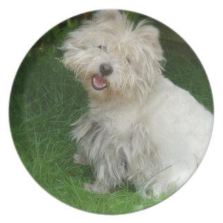 Bichon Frise Dog Plate