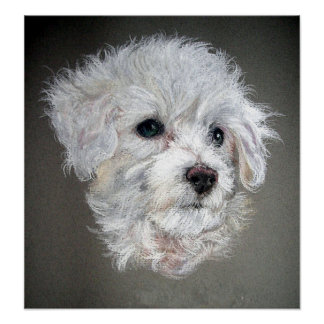 Bichon Frise Dog Portrait Poster Print