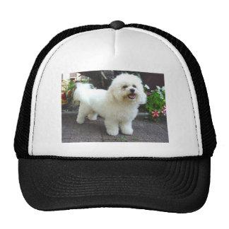 Bichon Frisé Dog Trucker Hat