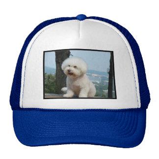 Bichon Frise Mesh Hat