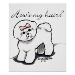 Bichon Frise Hows My Hair Poster