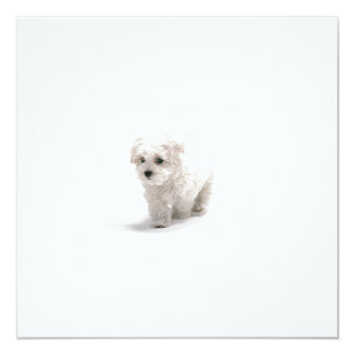 Bichon Frise Invitation