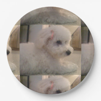 Bichon frise laying.png paper plate