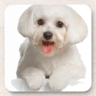 Bichon Frise Puppy Drink Coaster