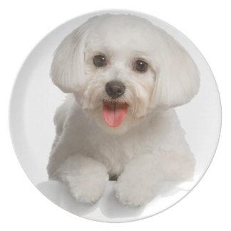 Bichon Frise Puppy Party Plates