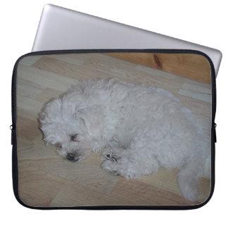 Bichon_Frise_puppy_sleeping