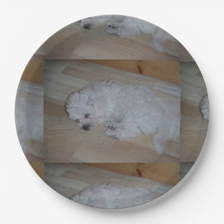 Bichon_Frise_puppy_sleeping.png Paper Plate