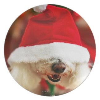 Bichon Frise puppy wearing Santa costume Dinner Plate