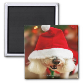 Bichon Frise puppy wearing Santa costume Magnet