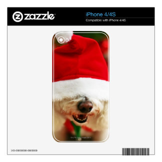 Bichon Frise puppy wearing Santa costume Decals For The iPhone 4