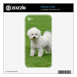 Bichon Frise Decals For The iPhone 4