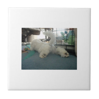 Bichon Frise Tail End Tile
