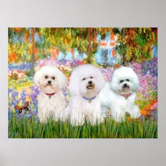 Bichon Frise Trio - Garden (VG) Poster