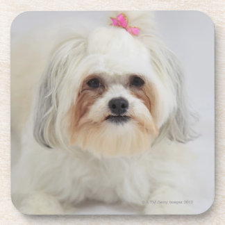 bichon frise with a pink bow in it's hair beverage coaster