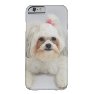 bichon frise with a pink bow in it's hair barely there iPhone 6 case