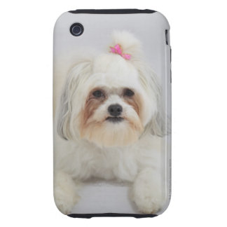 bichon frise with a pink bow in it's hair iPhone 3 tough cover