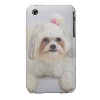 bichon frise with a pink bow in it's hair Case-Mate iPhone 3 case