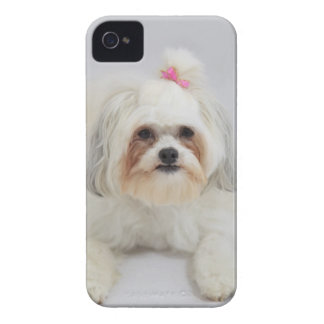 bichon frise with a pink bow in it's hair Case-Mate iPhone 4 case