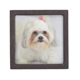 bichon frise with a pink bow in it's hair gift box