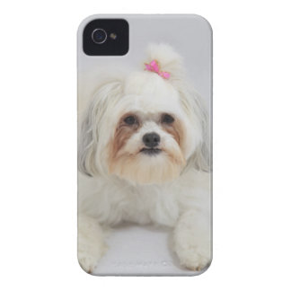 bichon frise with a pink bow in it's hair iPhone 4 case
