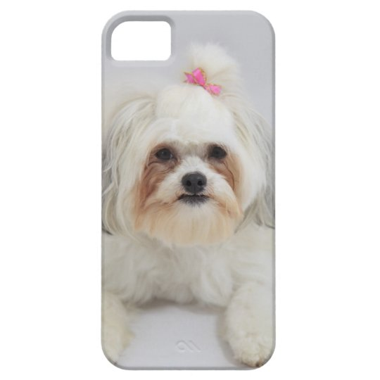 bichon frise with a pink bow in it's hair iPhone SE/5/5s case