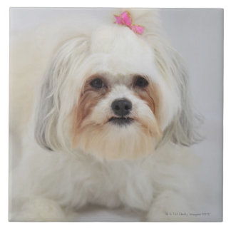 bichon frise with a pink bow in it's hair tile