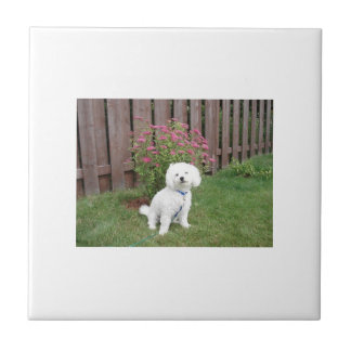 Bichon Frise with Flowers Tile