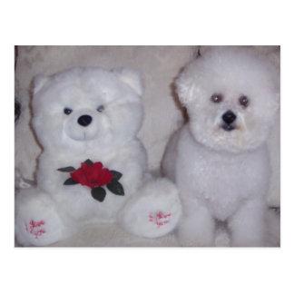 Bichon frise with white teddy bear. postcard