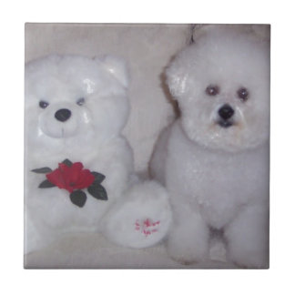 Bichon frise with white teddy bear. tile