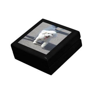Bichon Frise Wooden Box
