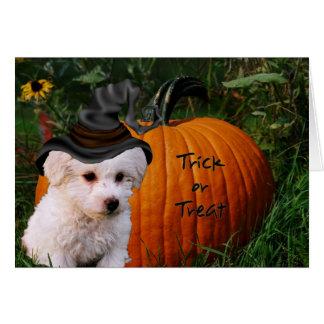 Bichon Halloween Card