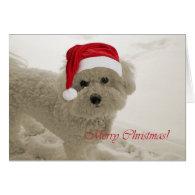 Bichon Merry Christmas Cards