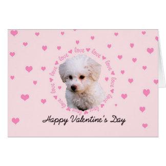 Bichon Valentine's Day Card