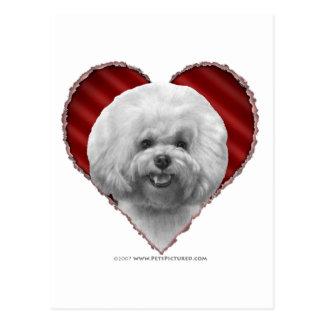 Bichon with Heart Postcard