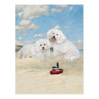 Bichons en la playa tarjeta postal