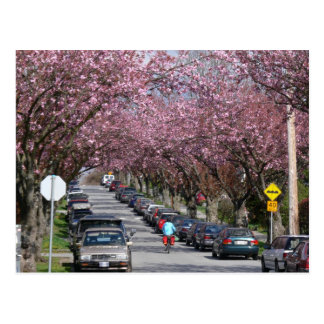 Bicicletas y flores de cerezo postal
