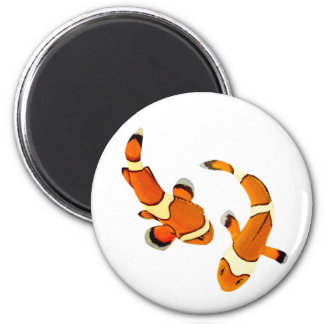 Bickering Clownfish Magnet