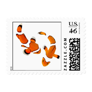 Bickering Clownfish on a White Background Stamp